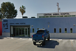 central animal hospital pet friendly vet in tucson az