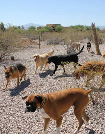 dog park in tucson arizona